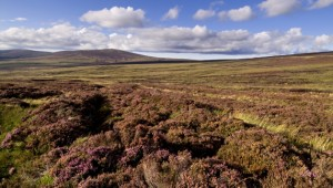 El parque nacional de Wicklow y Sally Gap